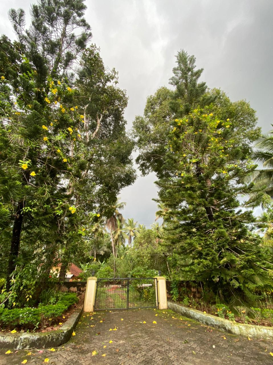 My home—Antoinella